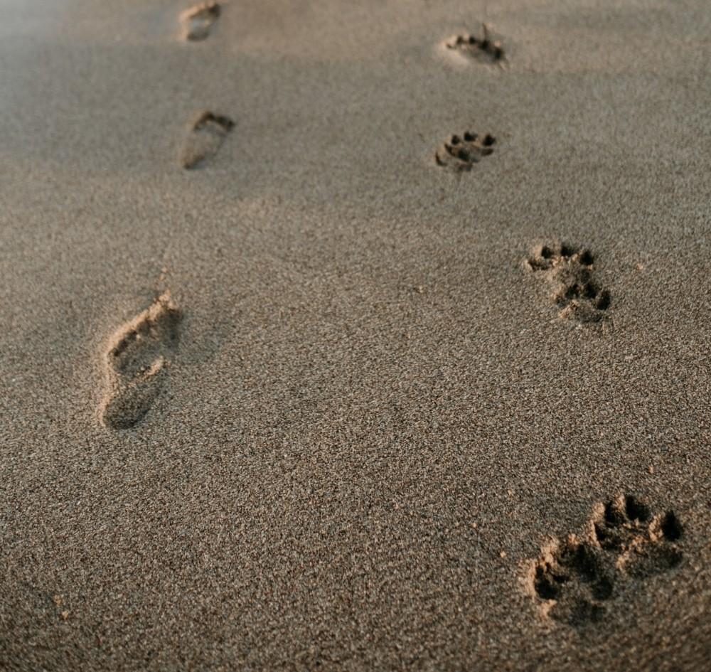 Footprints - viral News