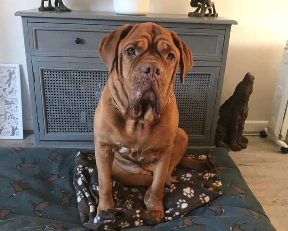 Ludo the dog - Scottish News