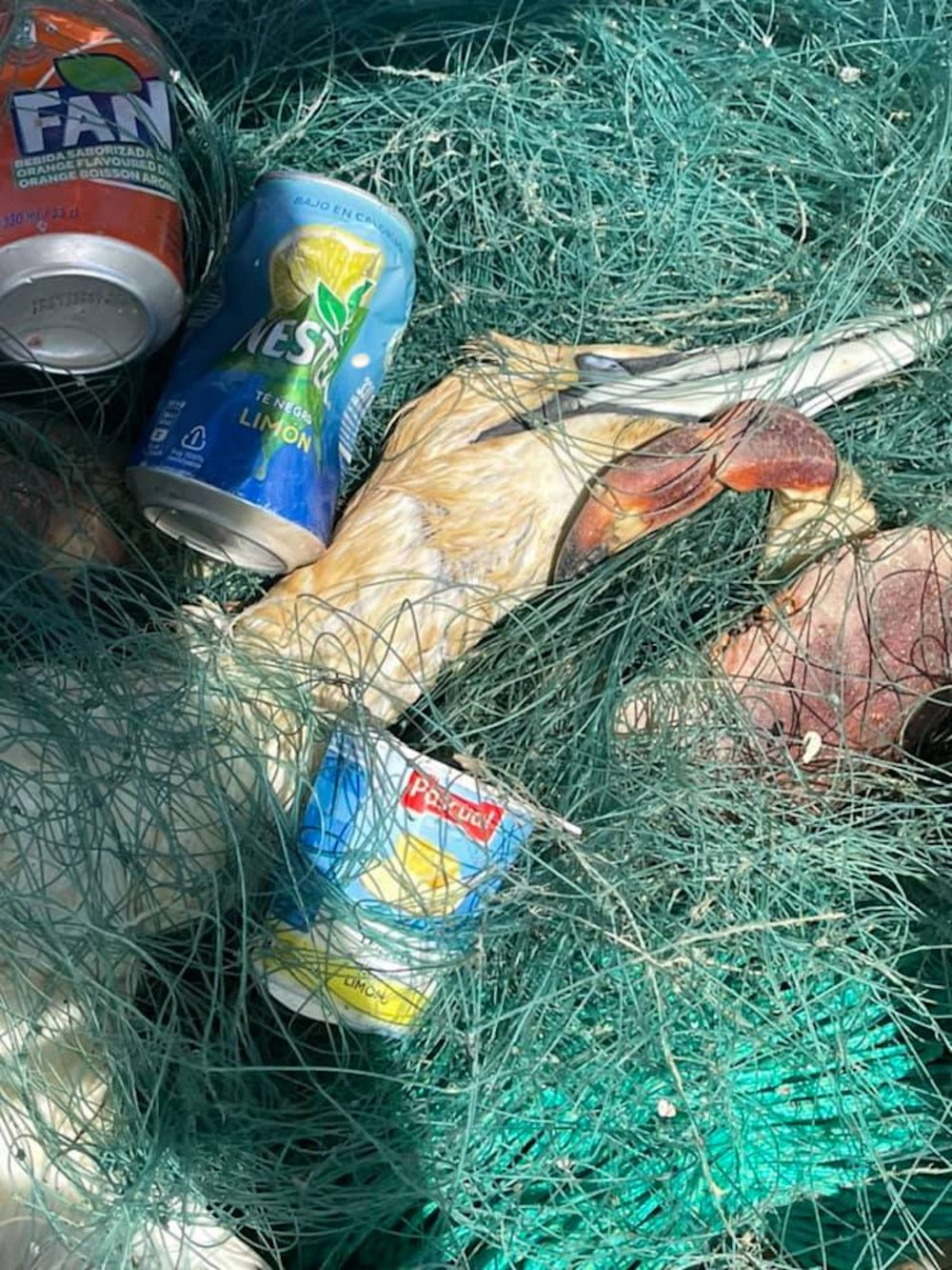 A dead gannet trapped in gill netting | Scottish News