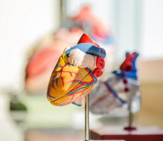 Heart - Research News Scotland