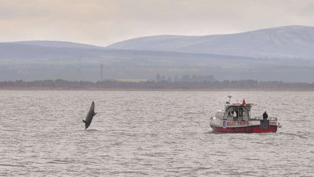 Dolphin vertical to water | Scottish Nature News