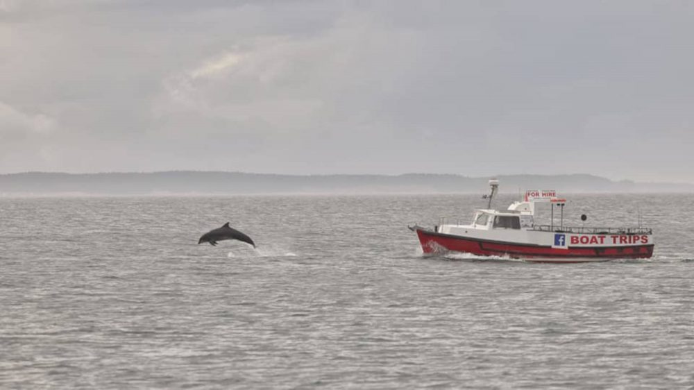 Jumping dolphin next to boat | Scottish Nature News