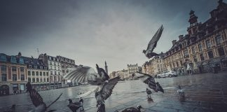 City birds and rural birds are genetically different according to a recent survey - UK and World News