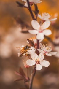 App aims to create bee friendly habitats by plotting out the plants they are attracted to - UK and World News