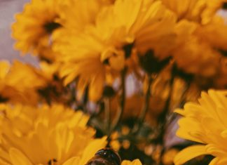 World Bee Day app created to allow citizens to be scientists for the day - UK and World News
