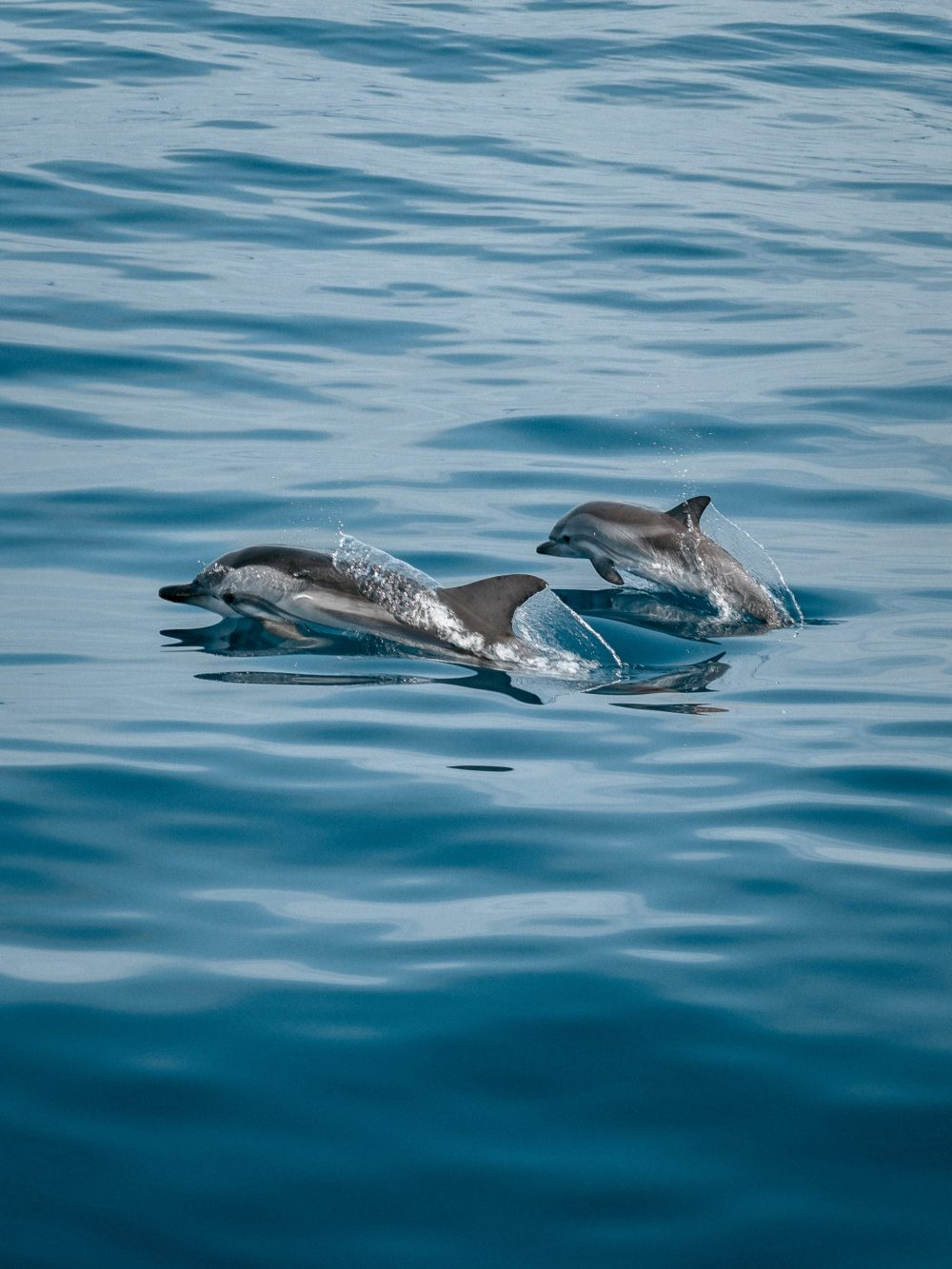 potential risk to dolphins due to unique fasting habits| Nature News Scotland