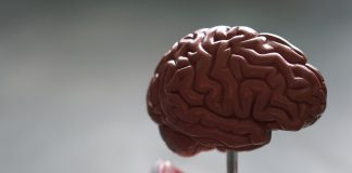 Research has revealed interesting facts about our memory - UK News