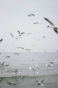 Birds in the city and birds in the country genetically adapt differently - UK and World News