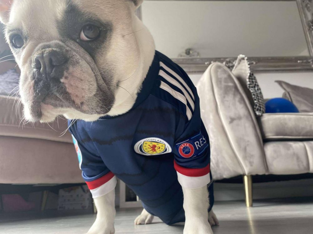 Bella the dog upset in her Scotland top | Scottish News
