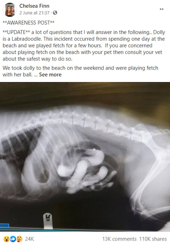 Chelsea Finn awareness Facebook post | Animal News UK