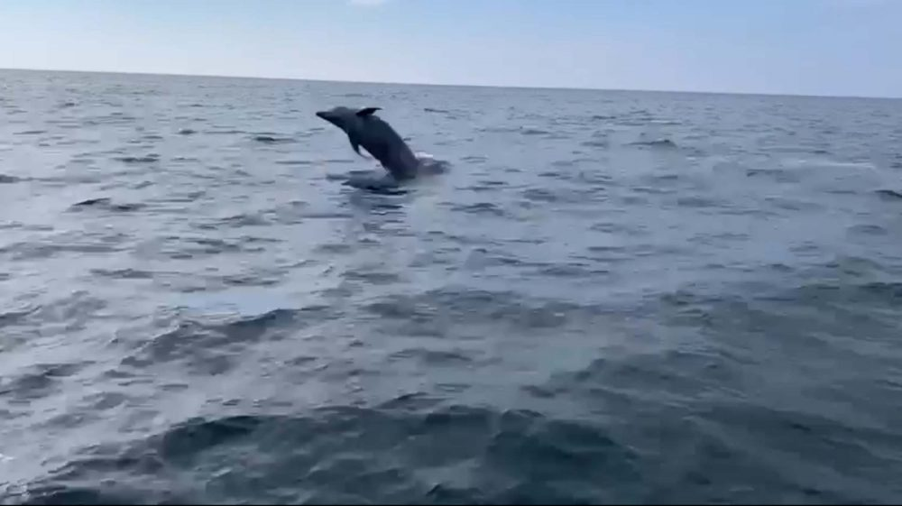 Dolphin sticking head out of water Stonehaven - Scottish News