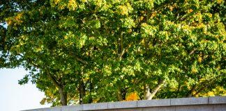RGU has been named as Scotland's top university - Scottish News