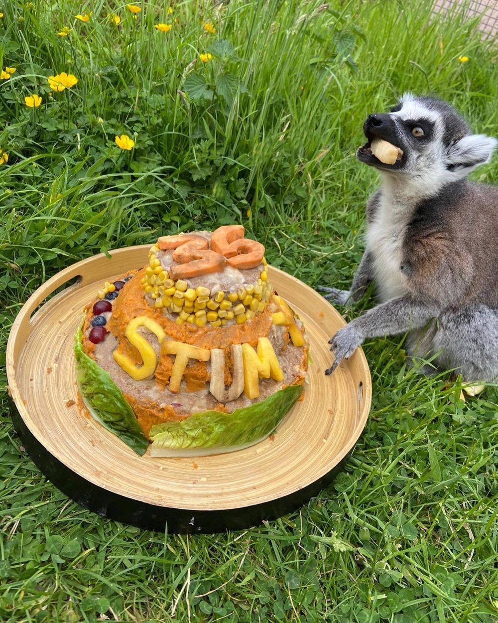 35 year old stumpy with his birthday cake   Animal News Scotland