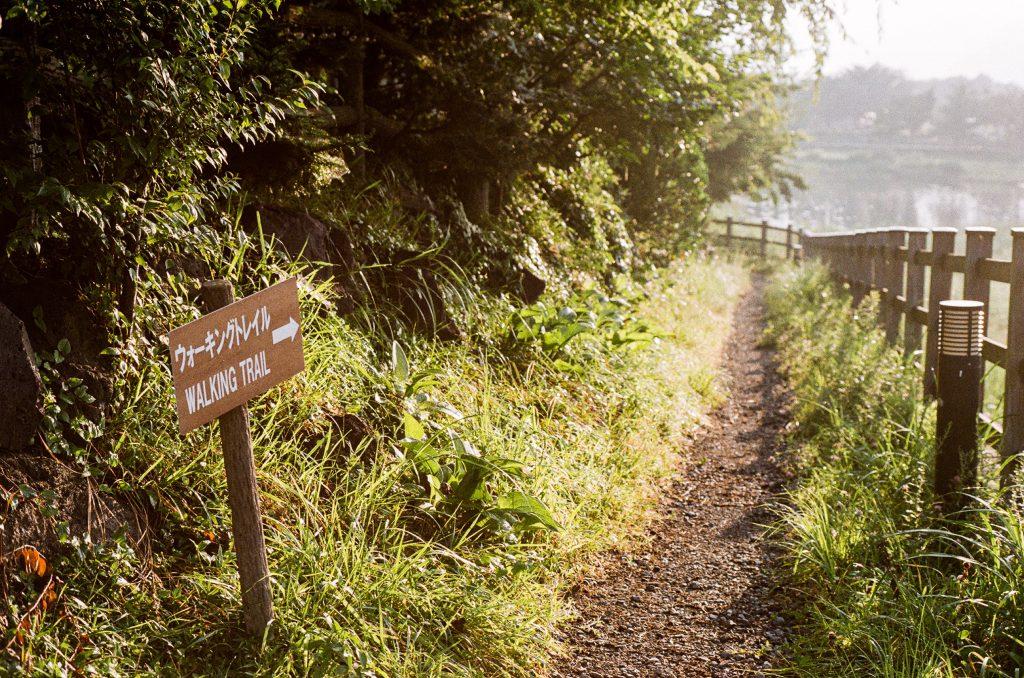 grassy walking trail in field - Scottish News