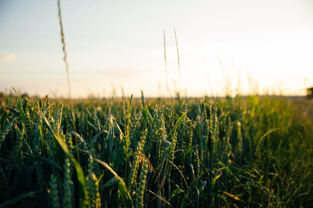 crops - Scottish News