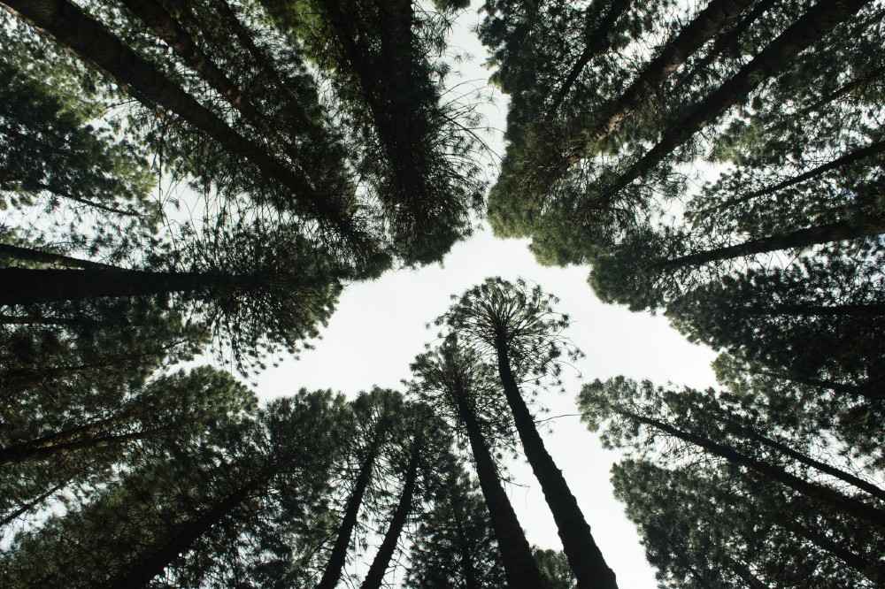 eco friendly - Education News Scotland