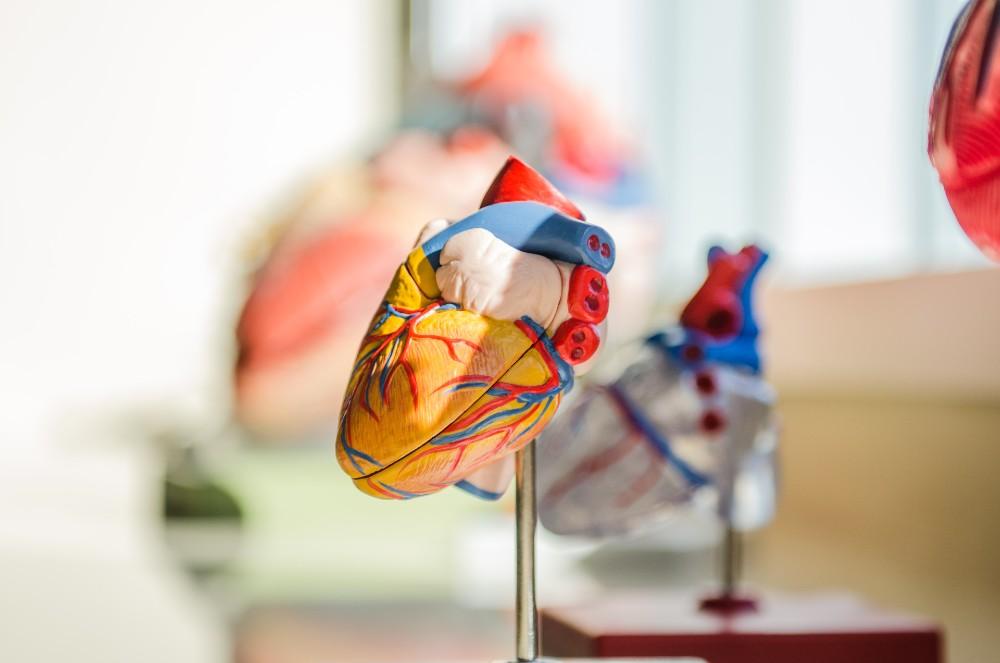 heart - Research News Scotland (1)