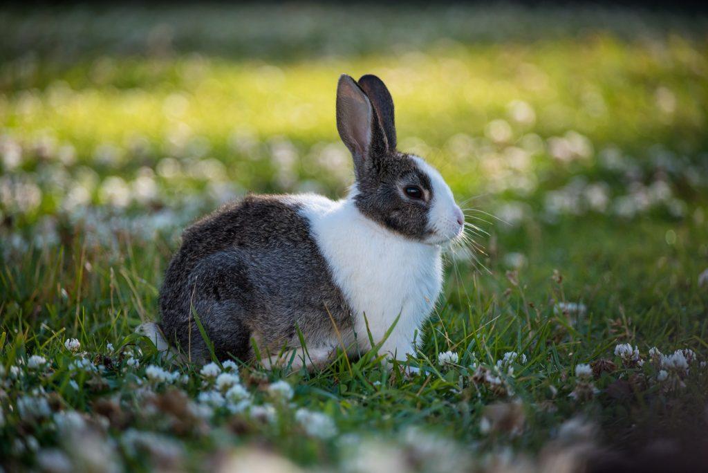 bunny rabbit sitting in field - Scottish News