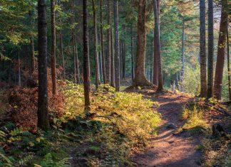 Nature trail - Scottish News