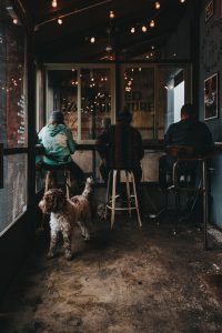 5.5% of Edinburgh's brunching venues are pet friendly - Scottish News