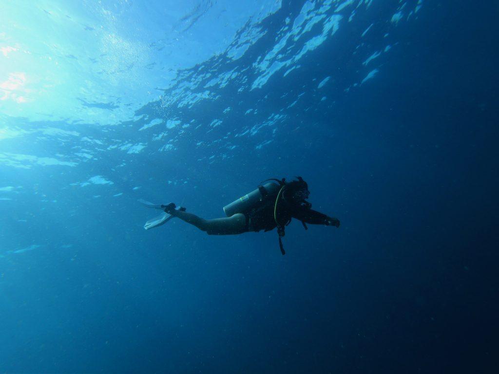 diver in the ocean - Scottish News