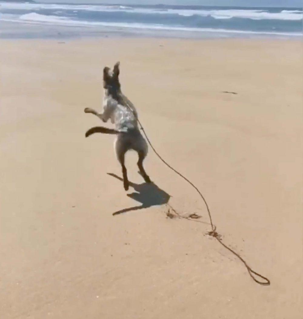 Blind dog jumping on beach- Scottish News