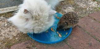 The prickly pal is joined by Morris the cat | Animal News UK