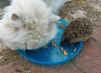 The prickly pal is joined by Morris the cat   Animal News UK
