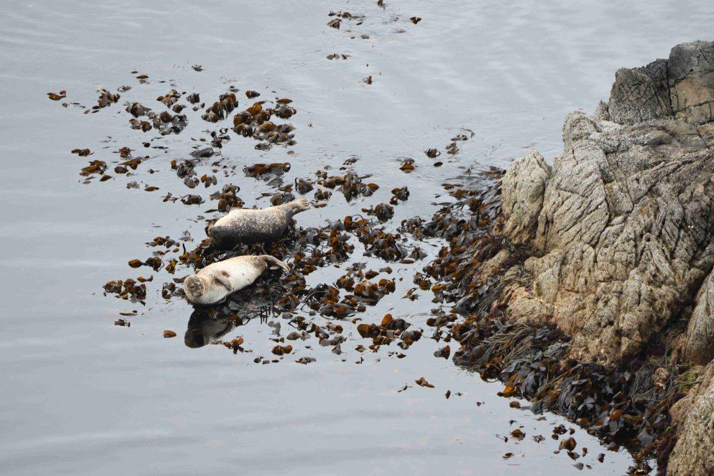 seals on a beach - Scottish News