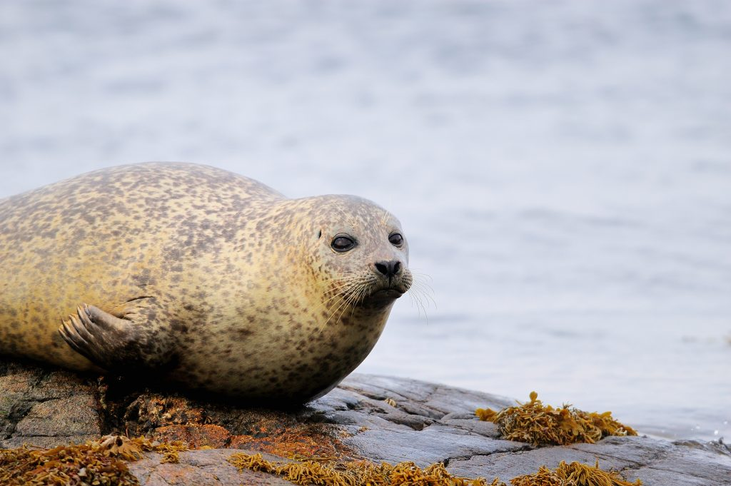 seal on beach - Scottish News