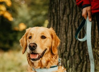 An Edinburgh based luxury dog accessories start-up business experiences fast growth during the pandemic - Scottish News