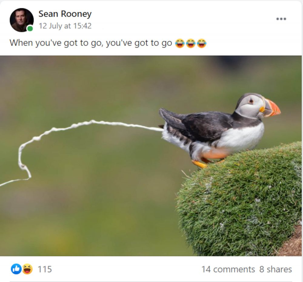 Sean Rooney puffin post - photography news Scotland