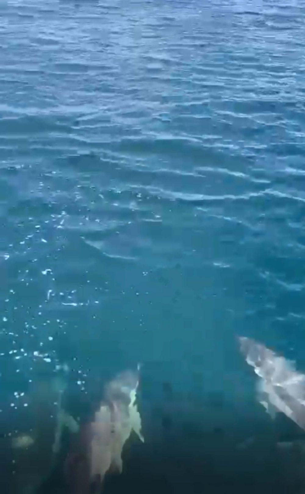 Dolphins under boat Skye - Wildlife News Scotland