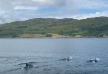 Dolphins Isle of Skye - Wildlife News Scotland