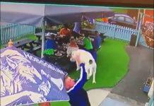 Adam Ravenhall dog catch - Animal News UK