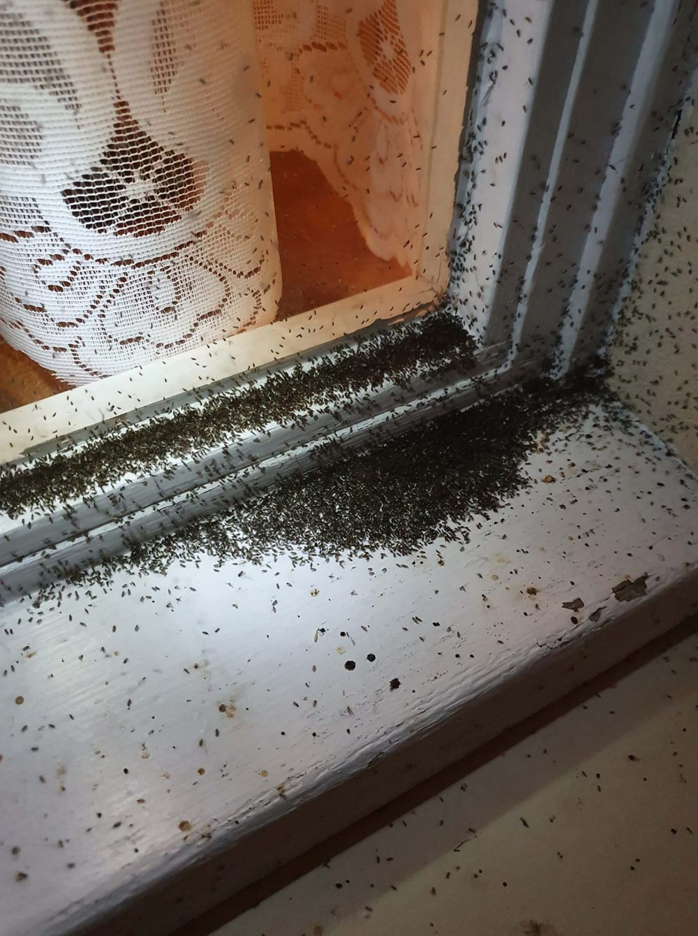 They congregated on the window sill - Scottish Nature News