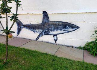 Shark on shed - Art News UK