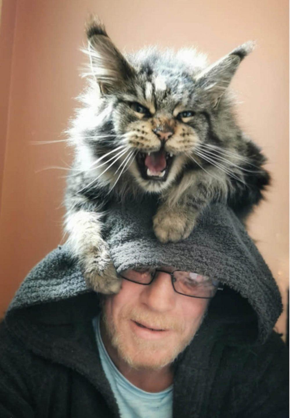 Wallace on William's head - Animal News Scotland