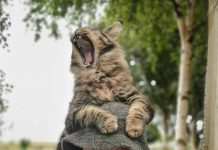 William and Wallace outside - Animal News Scotland