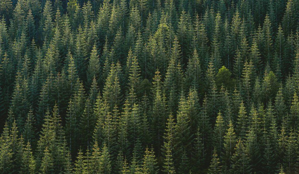 Forest - scottish news