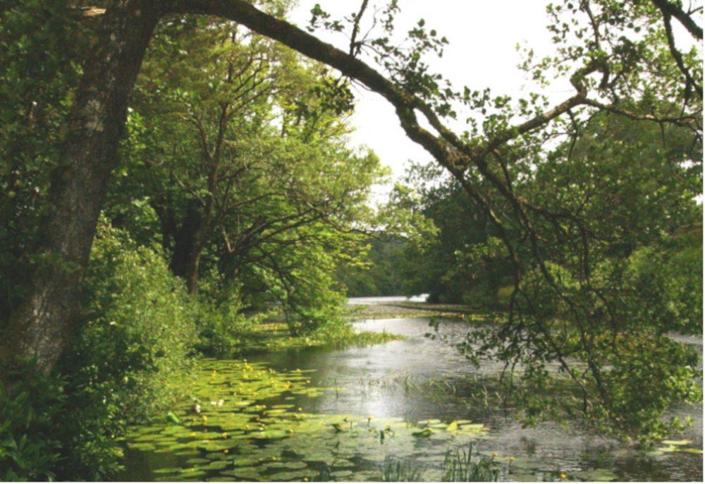 Aros Park Tobermory - Scottish News