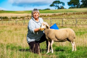 Libby Elliot working with the flock at Lucky Ewe