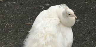Xander - animal news Scotland