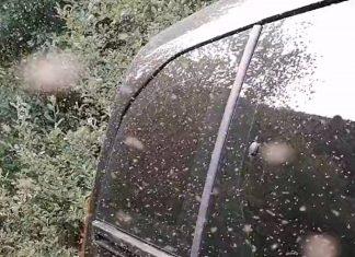 Ravenous midges swarm hillwalker | Scottish News