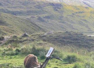Stag headbutting sign - Wildlife News Scotland