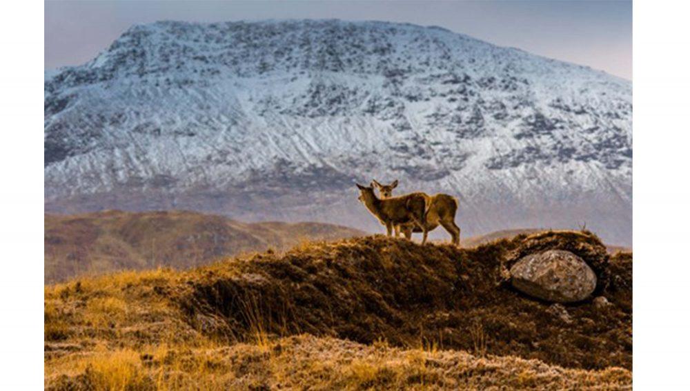 Two deer near mountain- Animal News