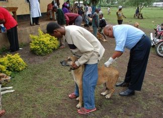 Dog vaccination key to wiping out disease
