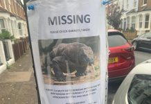 """The poster of the """"missing"""" Komodo dragon"""
