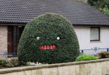 The monster tree, pictured in a garden in the Scottish Highlands