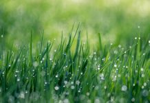 Royal Edinburgh Hospital receives Green Flag Award for greenspace - Environment News